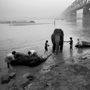 Bathing Elephants, One with Heart-Painted Trunk Gandak River, 1996. India. copyright photographer Marilyn Bridges