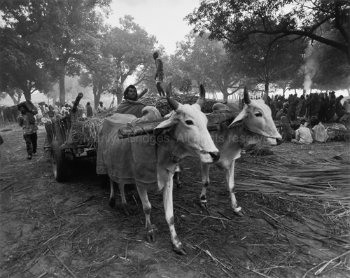 Oxcart with Driver, Sonepur Mela, 1996. India. copyright photographer Marilyn Bridges